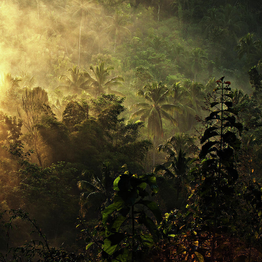 Jungle Photograph - ..... The Atmosphere Of The Morning ..... by Johanes Januar