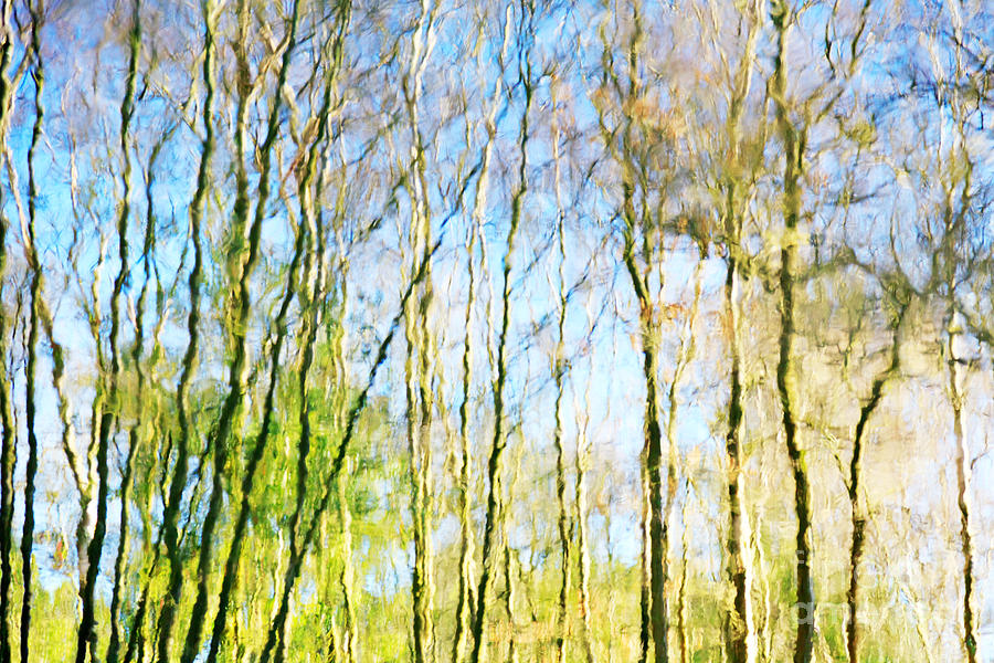 Ashdown Forest Photograph -  Tree Reflections Abstract by Natalie Kinnear