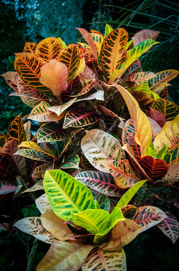 Variegated Plants Photograph by Gene Sherrill