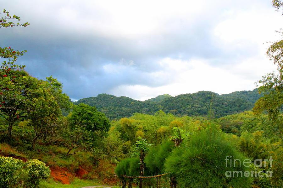 Westmoreland Jamaica 11 by Debbie Levene