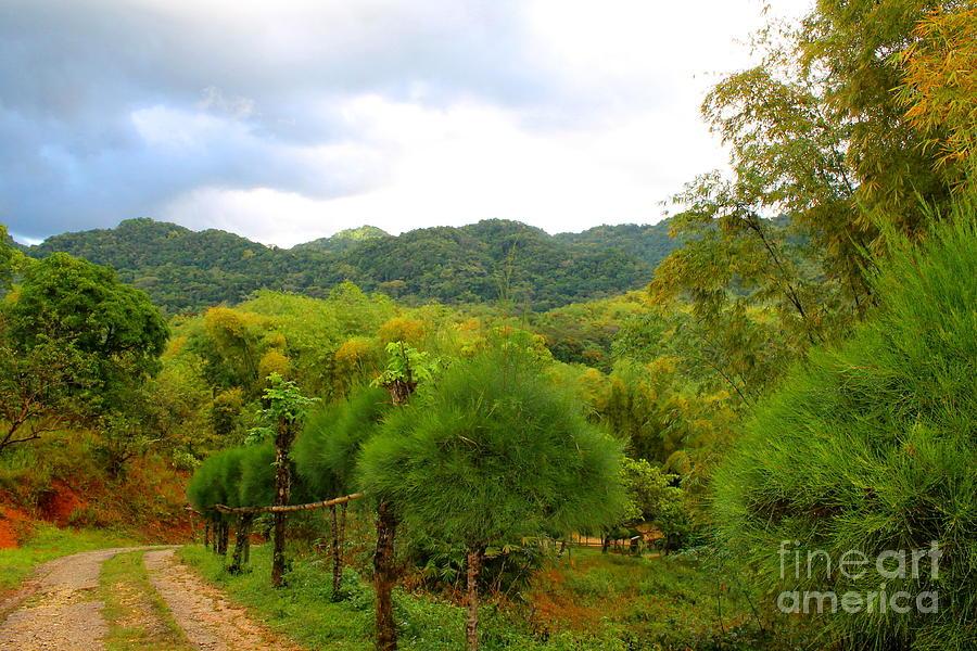 Westmoreland Jamaica 12 by Debbie Levene