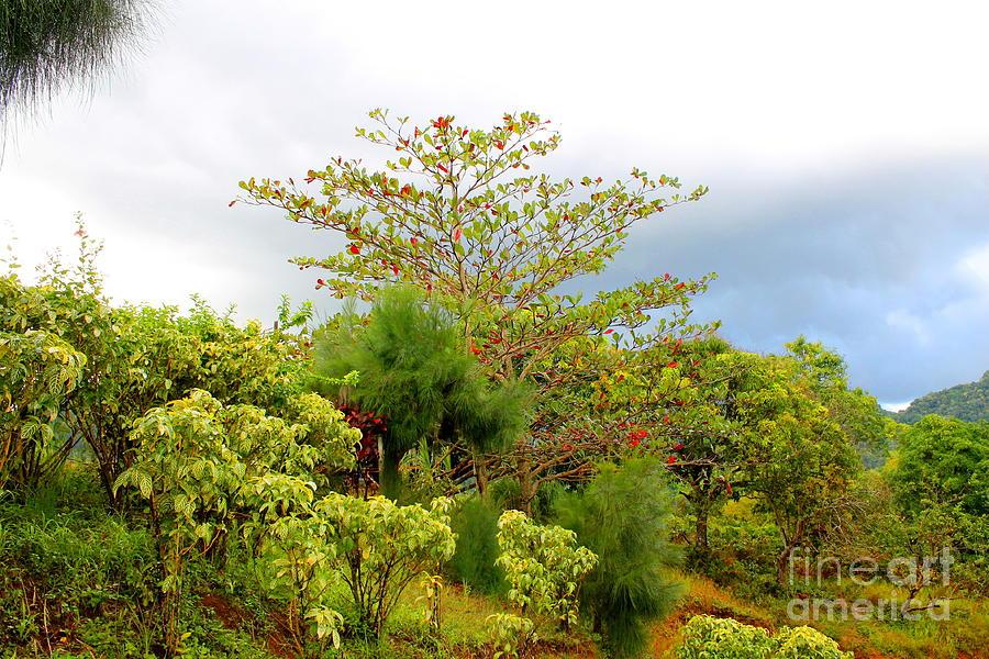 Westmoreland Jamaica 13 by Debbie Levene