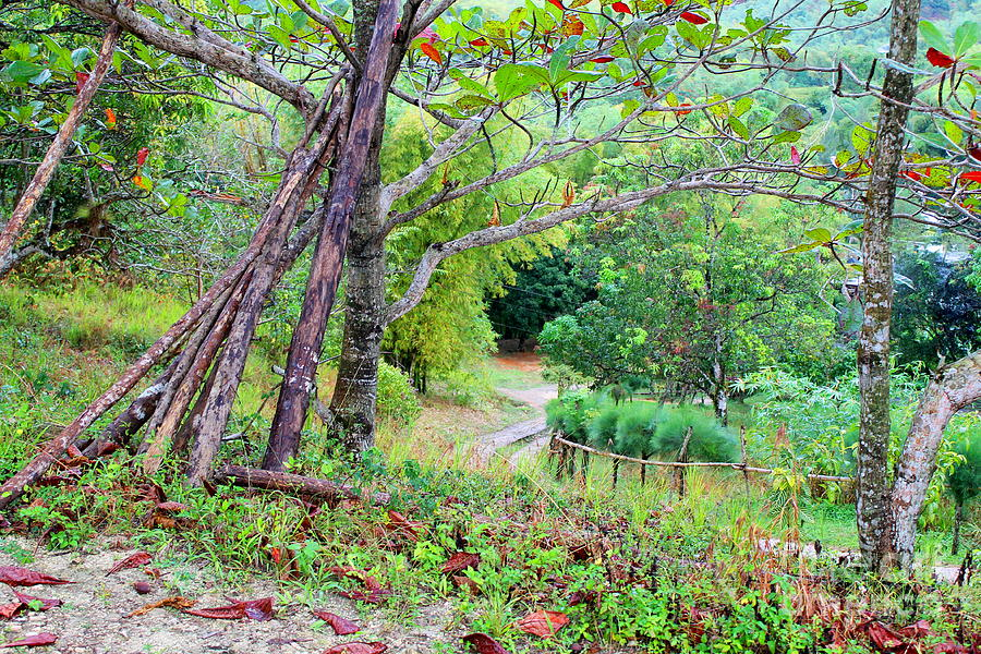 Westmoreland Jamaica 14 by Debbie Levene