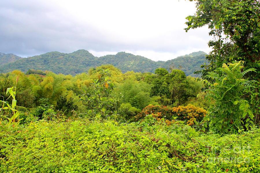 Westmoreland Jamaica 15 by Debbie Levene