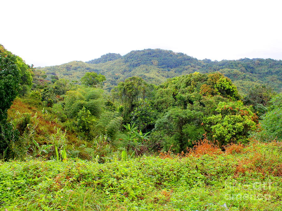 Westmoreland Jamaica 16 by Debbie Levene