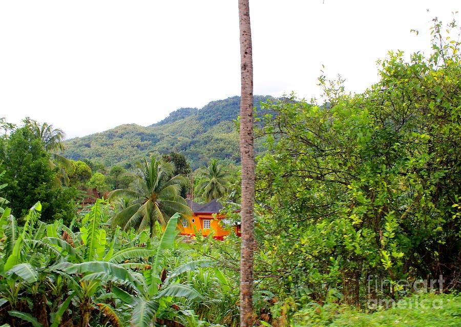 Westmoreland Jamaica 18 by Debbie Levene