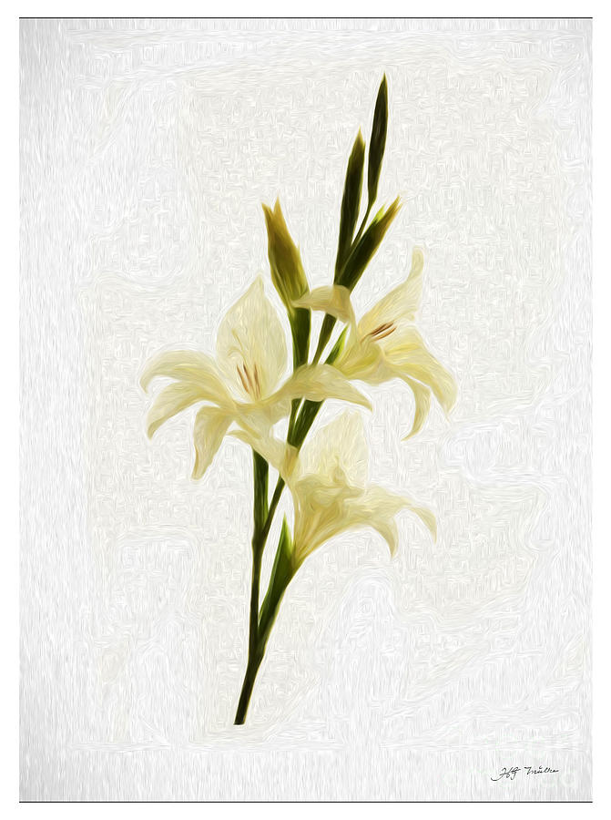 Flowers Painting -  White Gladiolus Mixed Media Painting by Heinz G Mielke