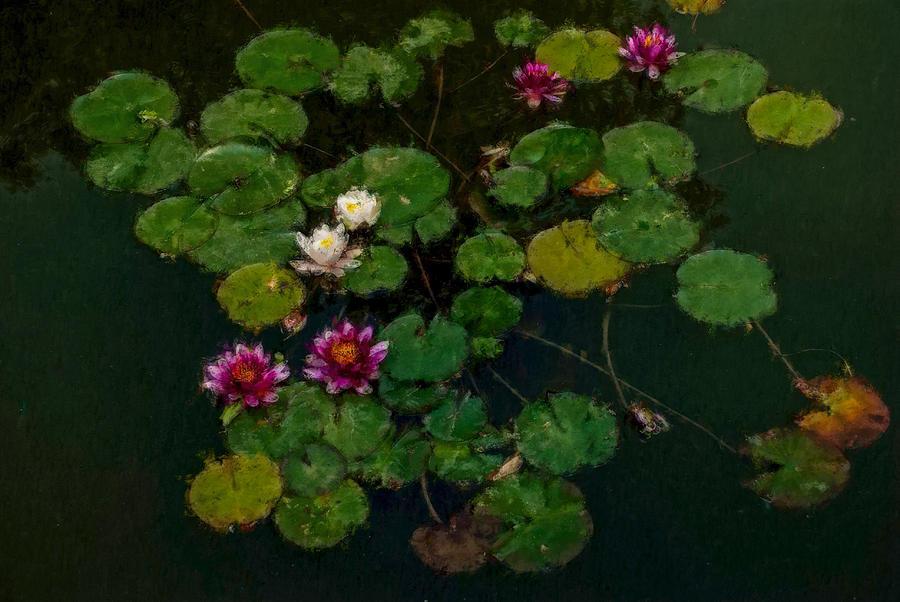 Asia Digital Art - 0151-lily -   Expressionist Plein Air Sl by David Lange
