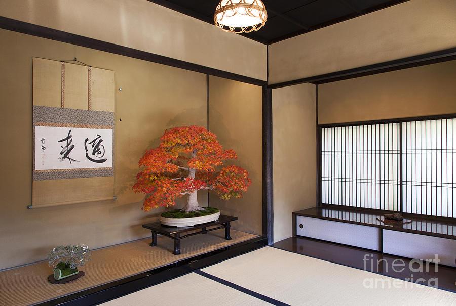 Japan Photograph -  Alcove with a bonsai by Tad Kanazaki