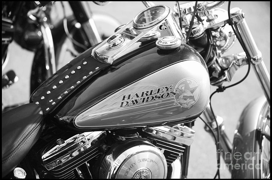 Harley Davidson Photograph - 110th Anniversary Harley Davidson by Stefano Senise