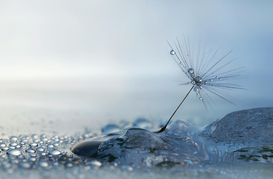 Macro Photograph - A Blue Morning by Heidi Westum