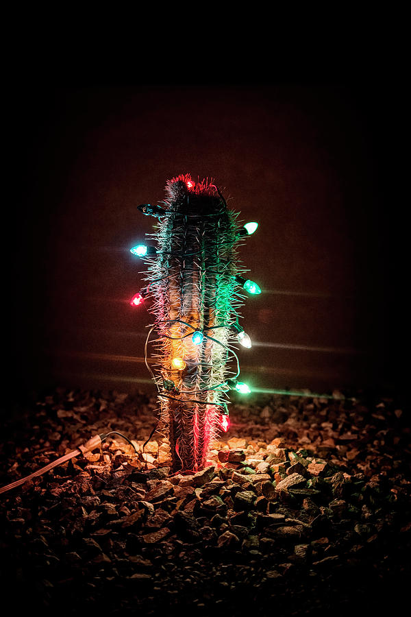 nobody photograph a cactus covered in christmas lights by chris carruth