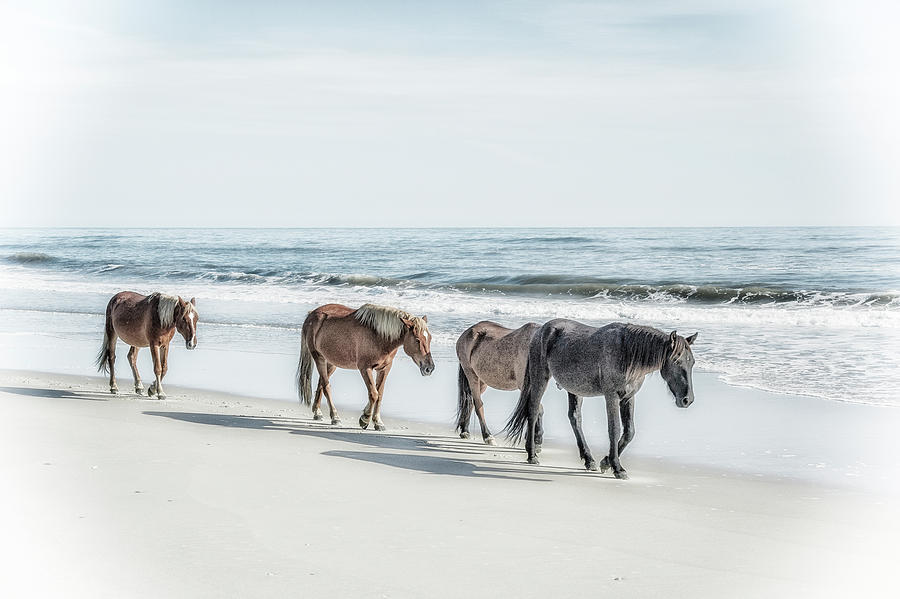 A Group Of Wild Spanish Mustangs Photograph By Rona Schwarz