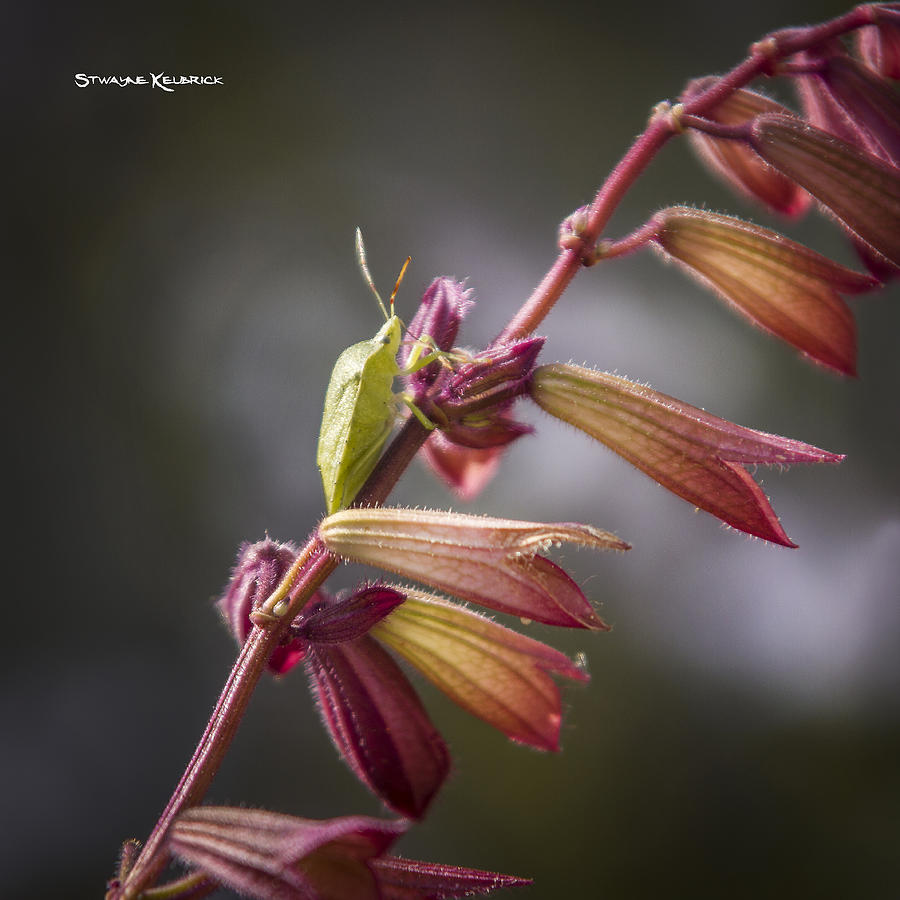 Nature Photograph - A Long Walk To The Top by Stwayne Keubrick