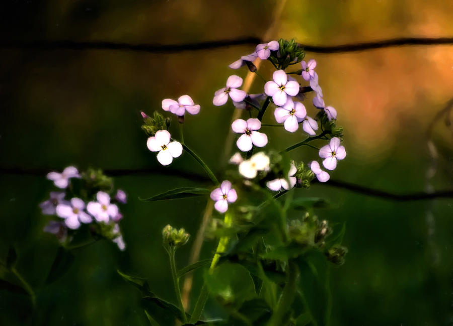 Flowers Photograph - A Secret Place by Steve Harrington