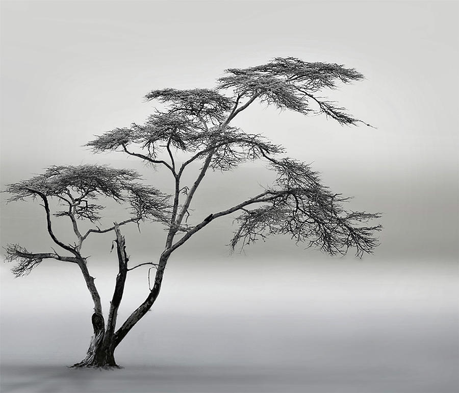 Tree Photograph - A Very Long Story by Piet Flour