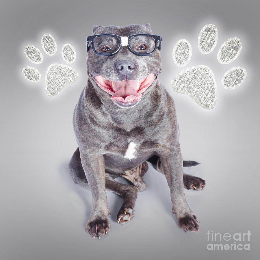 Cute Photograph - Access To Smart Dog Training by Jorgo Photography - Wall Art Gallery