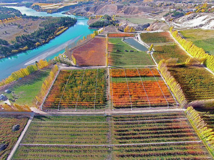 Aerial Photograph - Aerial Over Autumn Orchards by David Wall