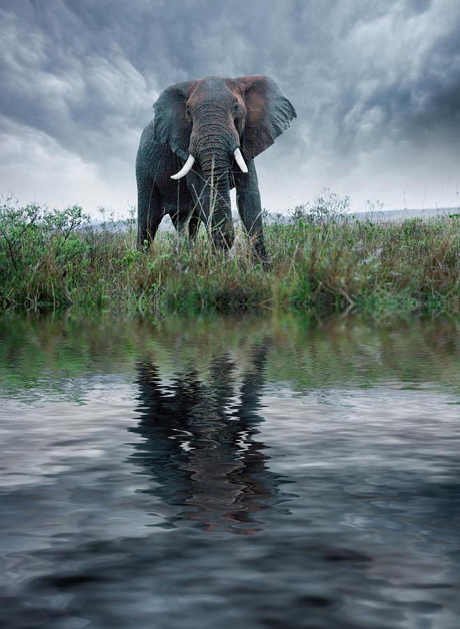 Adult Photograph - Africa, Kenya, Masai Mara Game Reserve 1 by Jaynes Gallery
