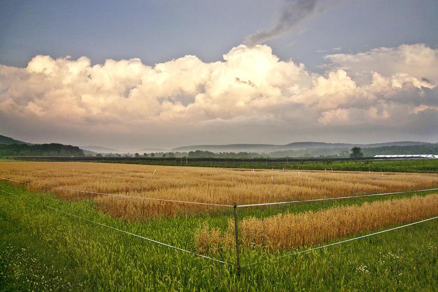 Landscape Photograph - After The Storm by Stan Bowman