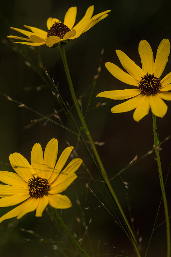 Wildflowers Photograph - Airy by Julie Andel