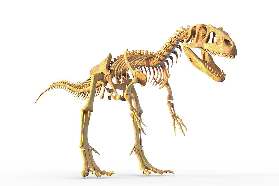 3 Dimensional Photograph - Allosaurus Skeleton by Roger Harris/science Photo Library
