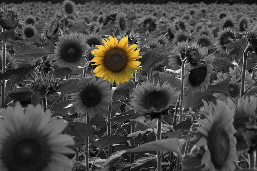 Farm Photograph - Alone by Andrea Galiffi