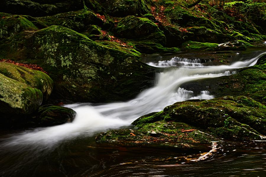 Along Spruce Brook by Mike Farslow