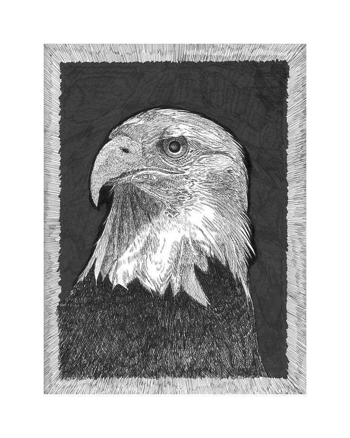 American Bald Eagle Drawing