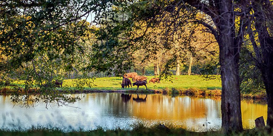 American Bison Photograph - American Bison by Sennie Pierson