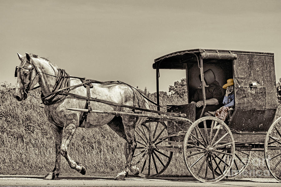 Horse Photograph - Amish Boy Tips Hat by Robert Frederick