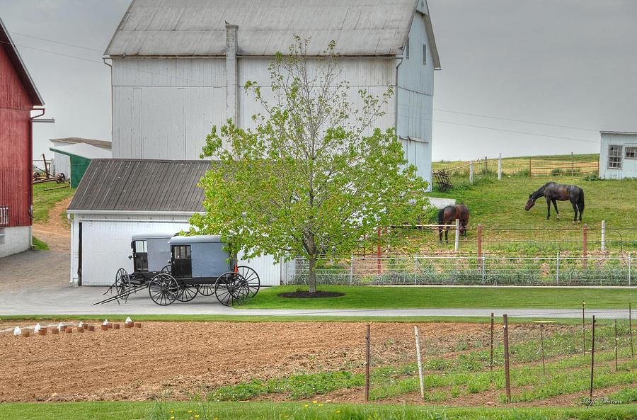 Country Photograph - An Amish Farm by Dyle   Warren