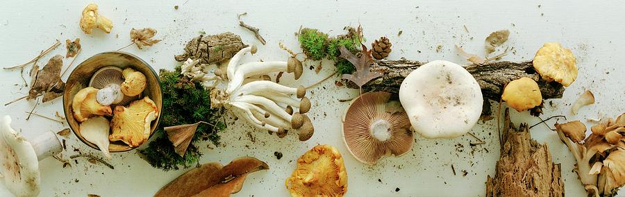 An Assortment Of Mushrooms Photograph by Romulo Yanes