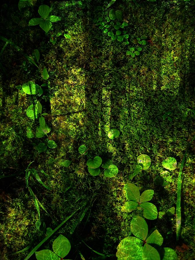 Forest Photograph - An Earthy Place by Shirley Sirois