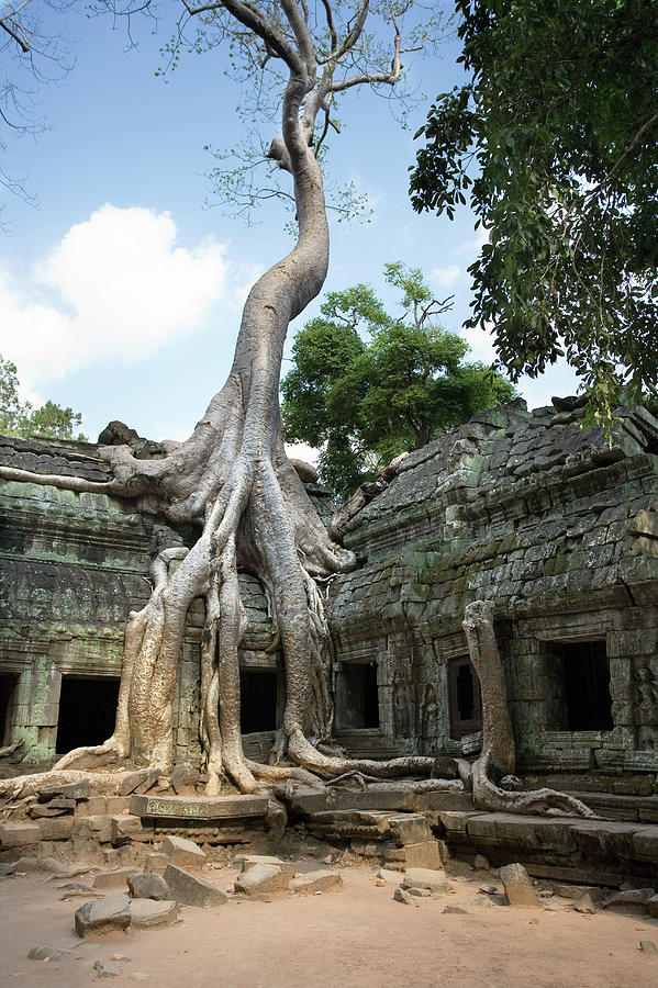 Silk Cotton Tree Photograph - Angkorian Temple by Steve Allen/science Photo Library