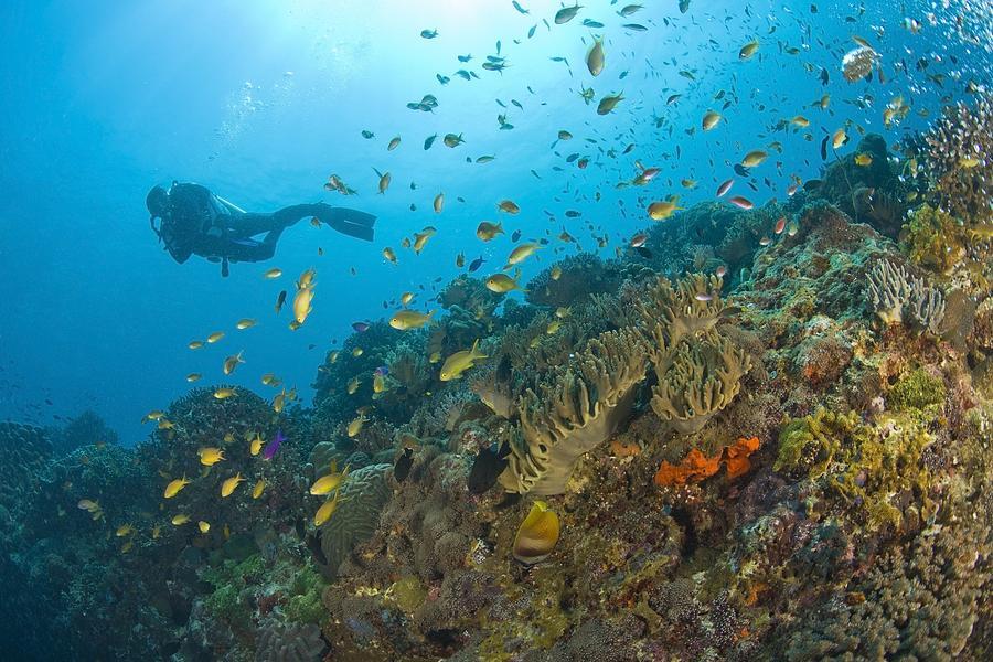Apo Island Marine Park, Negros Oriental Photograph
