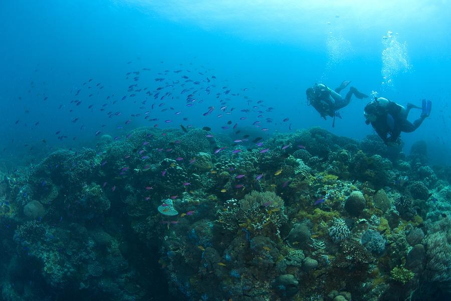 Apo Island Marine Park, Philippines Photograph