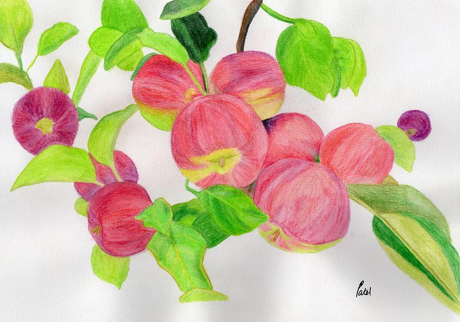 Watercolour Pencils Painting - Apples by Bav Patel