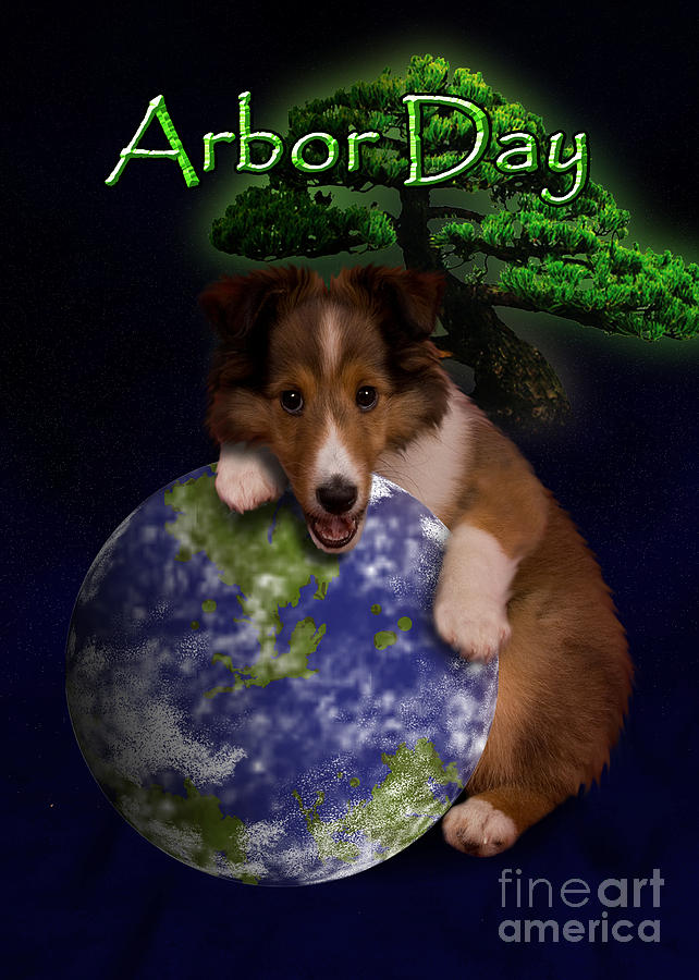 Arbor Day Photograph - Arbor Day Sheltie Puppy by Jeanette K