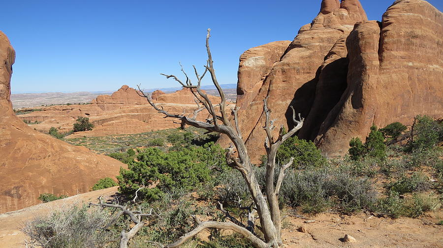 Landscape Photograph - Arches National Park by Diane Mitchell