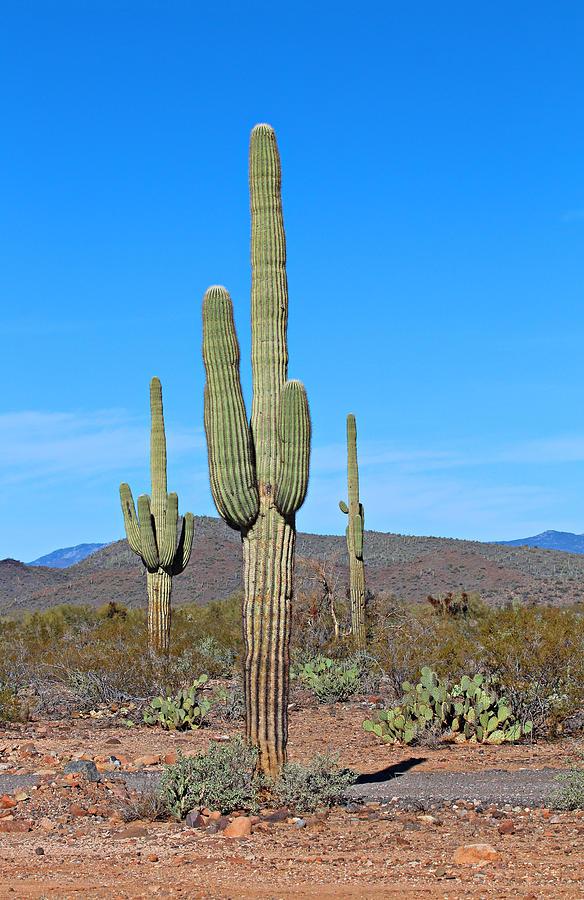 Desert Photograph - Arizona Desert by Paul Fell