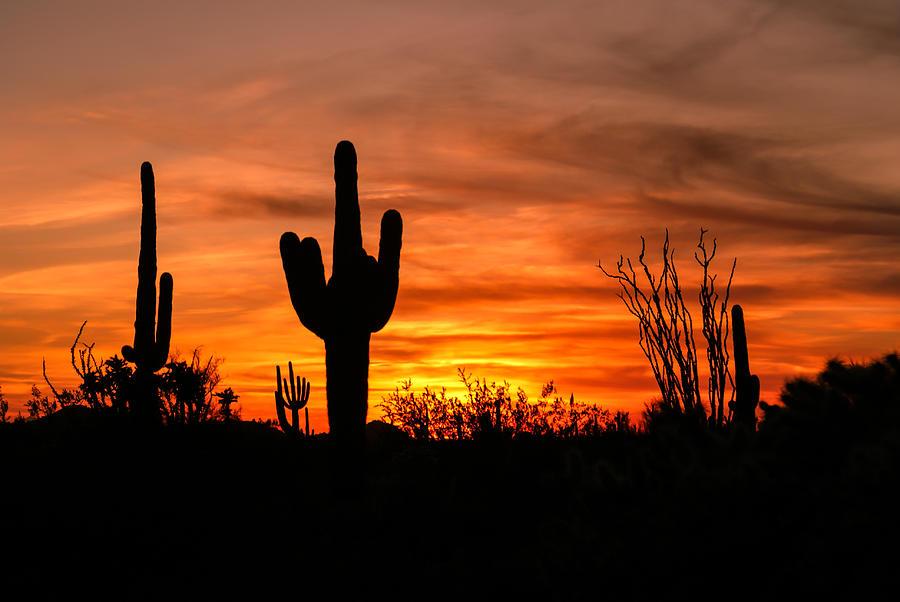 Arizona Saguaro Cactus Sunset Photograph by Michael J Bauer