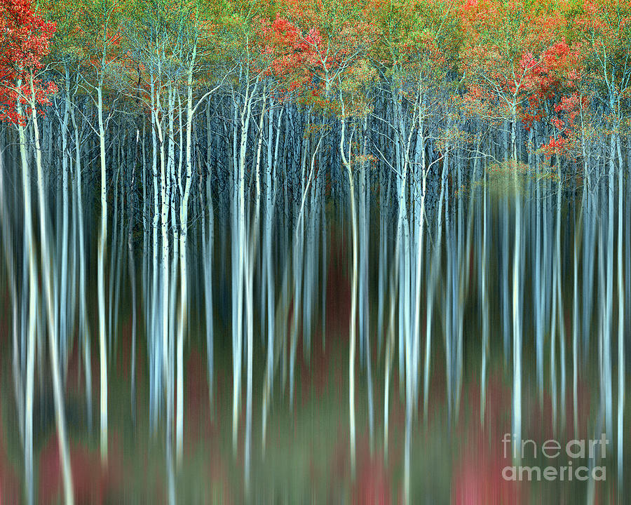 Abstract Photograph - Army Of Trees by Edmund Nagele