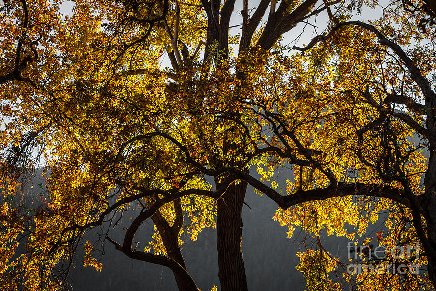 Autumn Abstract Photograph - Autumn Abstract by Mitch Shindelbower