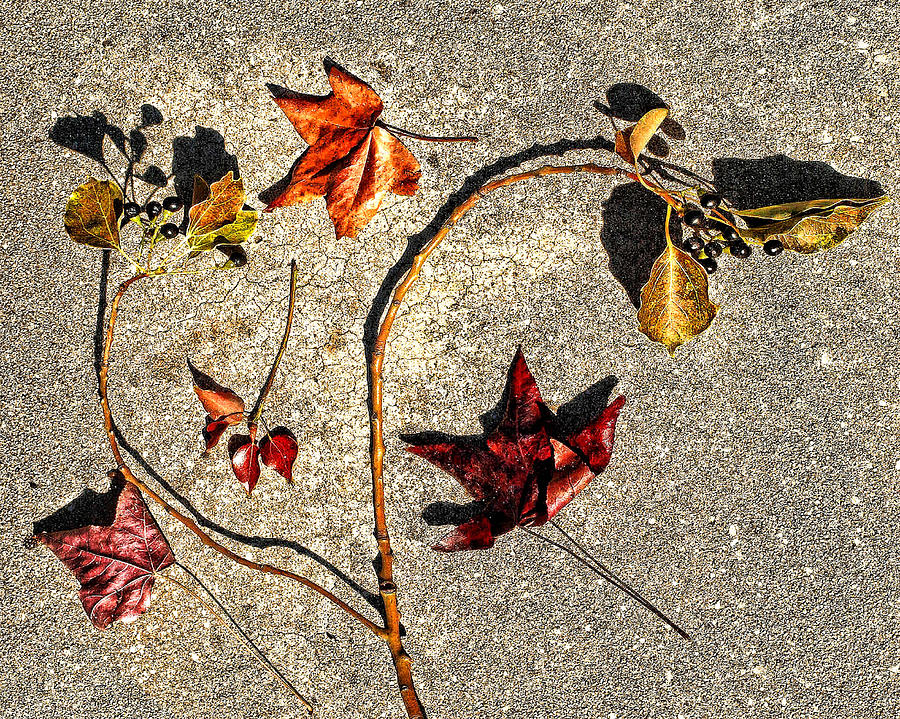 Leaves Photograph - Autumn by Camille Lopez