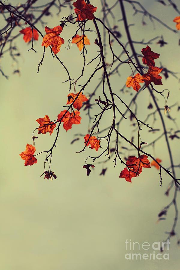 Autumn Photograph - Autumn by Diana Kraleva