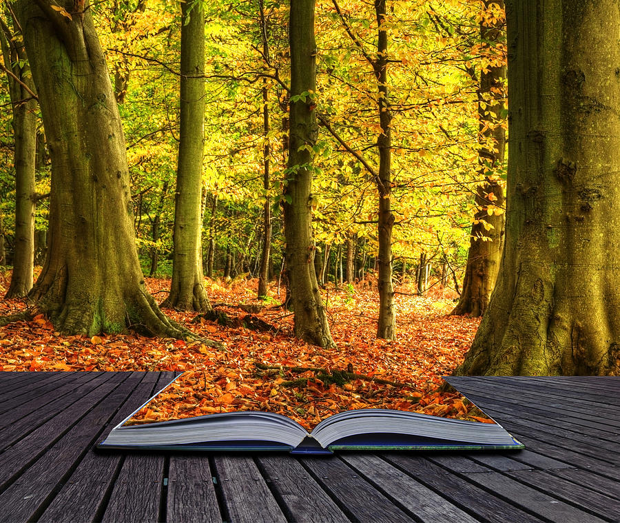 Magic Photograph - Autumn Fall Forest Landscape Magic Book Pages by Matthew Gibson