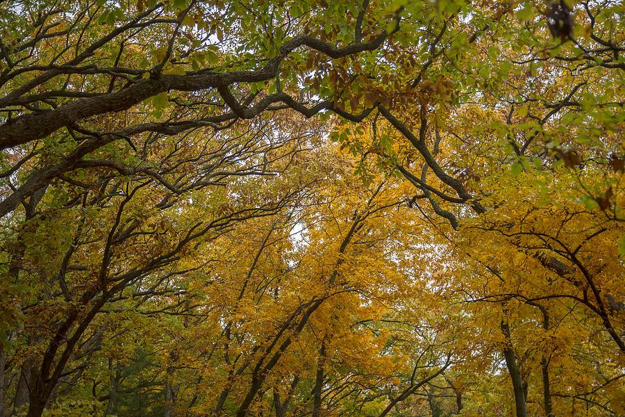 Autumn Forest Photograph