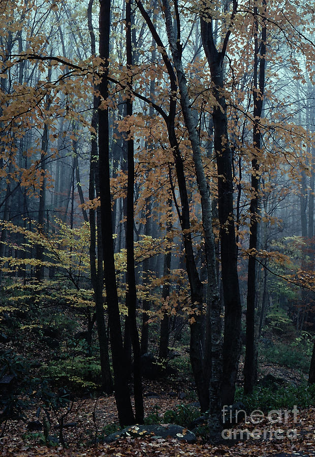 Nature Photograph - Autumn In The Forest by Adeline Byford