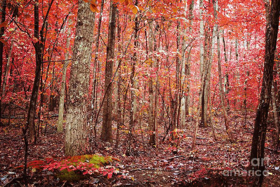 Autumn Photograph - Autumn Landscape by Kim Fearheiley